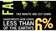 Save Rainforest